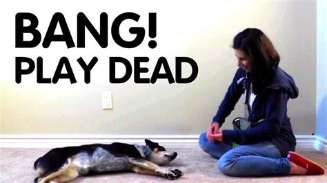 teach dog to play dead youtube