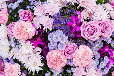 imagenes de rosas moradas y azules flores rosas y moradas descargar fotos gratis