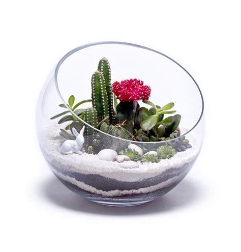 terrarium container designs pinterest