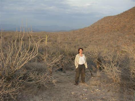 ecol lett jeannine cavender bares on ecology phylogenetic biology
