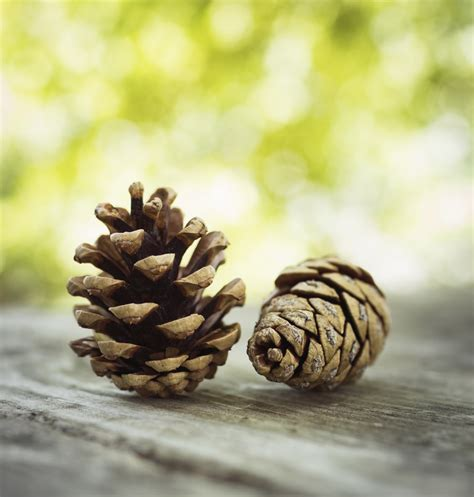 17 fun things to make with pine cones images frompo
