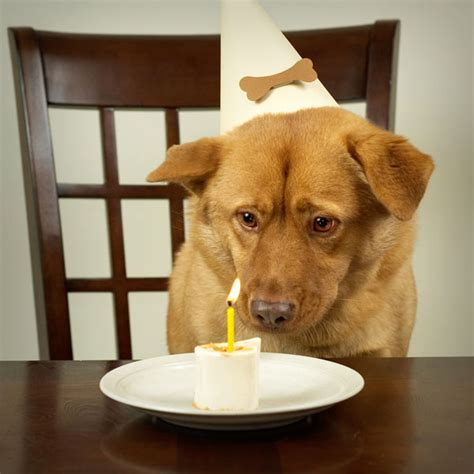 is peanut butter ok for dogs can dogs eat peanuts safely