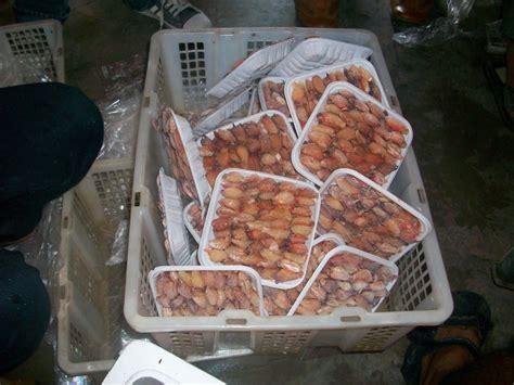 Keranjang Kepiting Soka mangrove dan kepiting pemalang kepiting soka