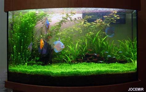 Best Substrate For Aquascaping Fish Tank Of November 06 Tank 1 At The Age Of Aquariums