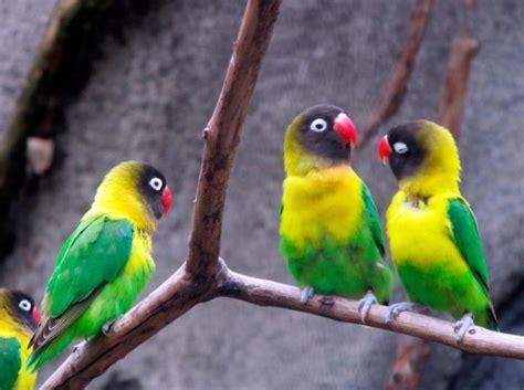 Vitamin Wp Lovebird Harga Vitamin Burung Lovebird Awal Tahun 2018 Majalah