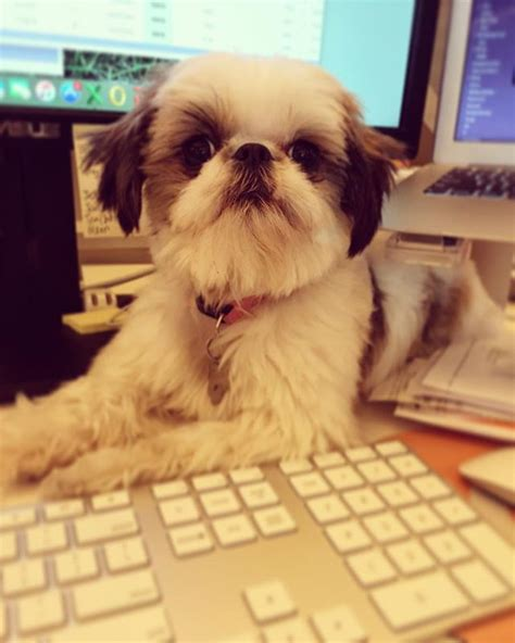 puppy keyboard 17 dogs trying to keep you from workin barkpost