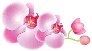 Corner Picture Frames orchids png clipart best web clipart