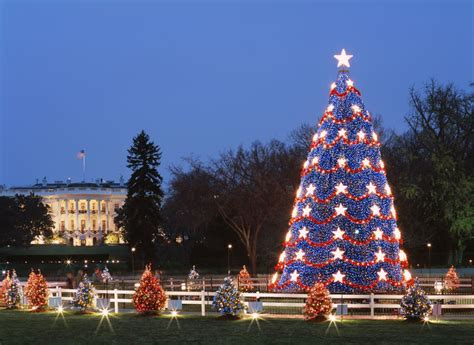 dc christmas trees free events in the washington d c area
