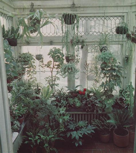 Best Window For Plants Pin By Leigh Strode Dixon On Houseplants