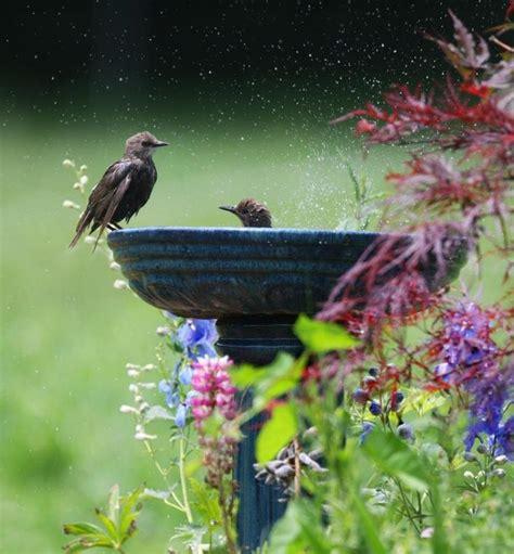 bird bath gardens out buildings pinterest