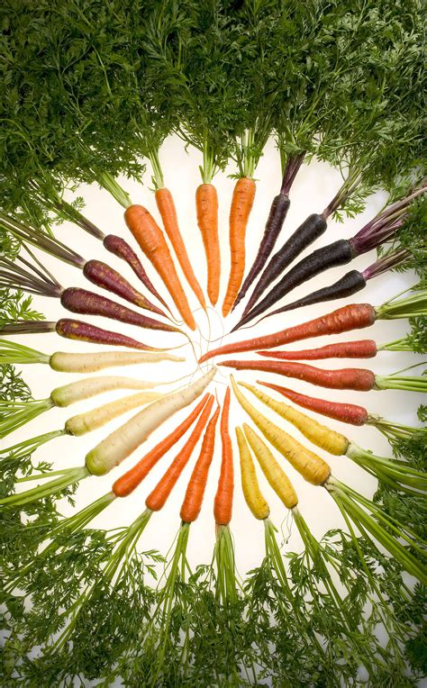 carrot colors file carrots of many colors jpg wikimedia commons