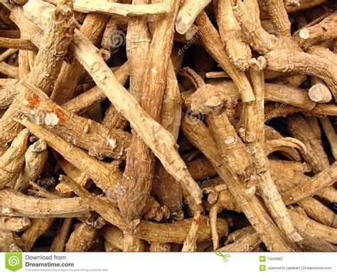 Herbal Ginseng ginseng roots from herbal pharmacy stock image