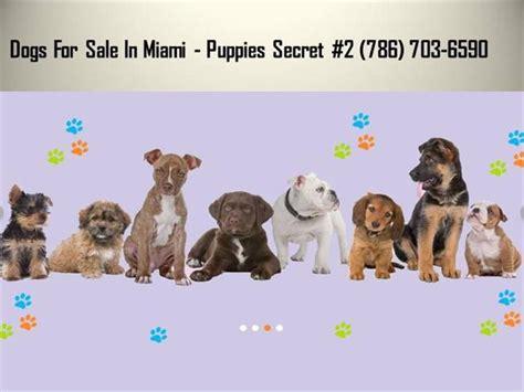 puppy store miami puppy stores in miami authorstream