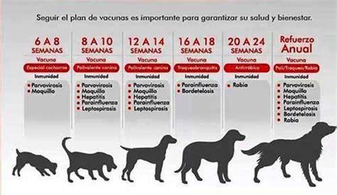 Calendario Y Sus Animales Vacunas Para Perros Calendario
