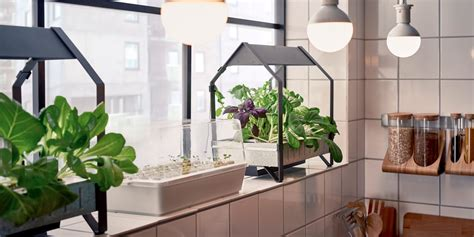 ikea released  hydroponic gardening collection business