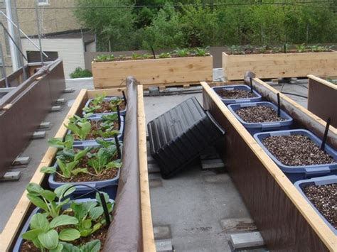 Sub Irrigated Planters by Green Roof Growers 2 Coir Vs Peat In A Sub Irrigated Planter Sip
