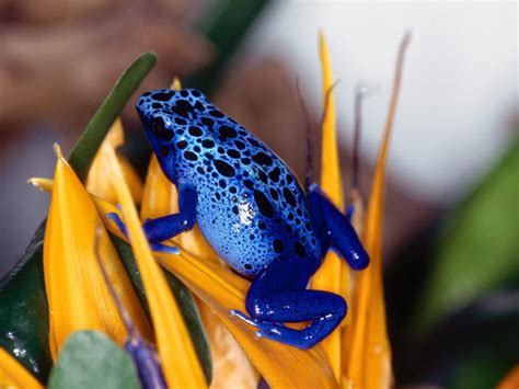 colorful frogs colorful frogs photo gallery