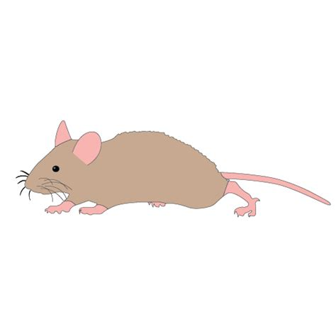 mouse clipart mouse running cliparts free clip free