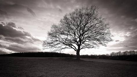 fotos de naturaleza en blanco y negro blog de fotograf 237 a fotograf 237 as en blanco y negro de la naturaleza paisaje