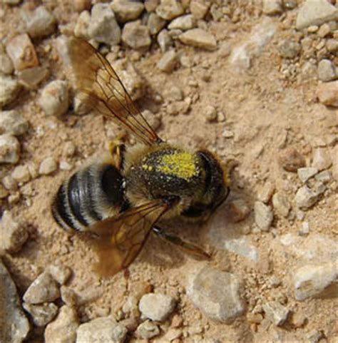 masonry bees pest control services in glasgow and