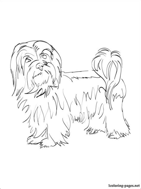 Havanese Dog Coloring Page | havanese coloring page coloring pages