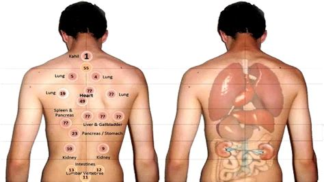 cpt report sle 10 amazing benefits of cupping therapy cure aids cancer