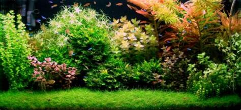 Aquascaping Techniques Aquascaping Les Plus Beaux Aquariums