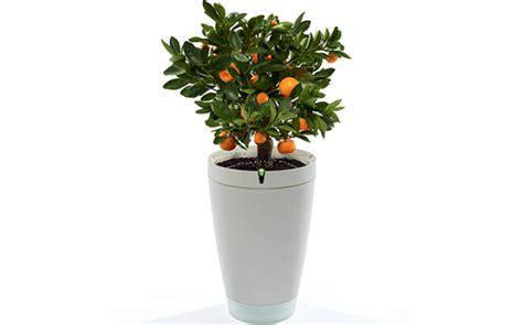 Potted Plants by Parrot Pot Parrot Store Official