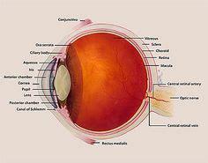 pattern dystrophy eye wiki 1000 images about reis bucklers on pinterest eye