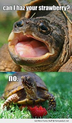 1000 images about turtle memes on pinterest turtles