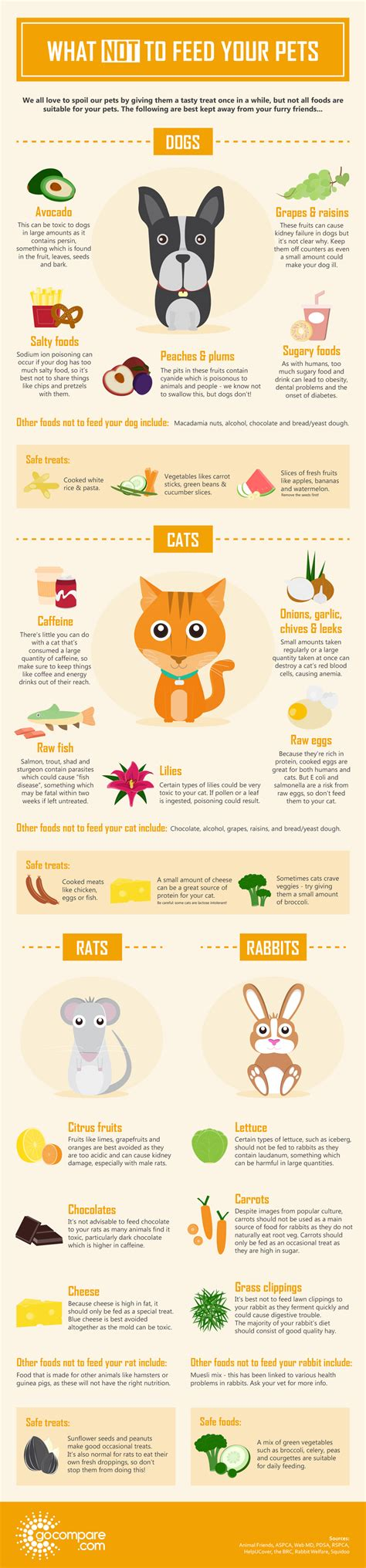 what not to feed dogs what not to feed your pets beingstray