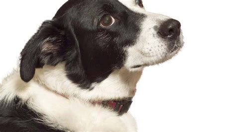 how to stop food aggression in puppies how to stop food aggression in dogs
