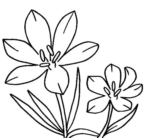 Flower Coloring Pages Printable by 25 Flower Coloring Pages To Color