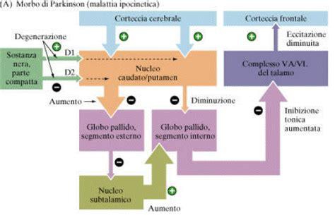 tremore interno a riposo sistema motorio somatico e sistema nervoso