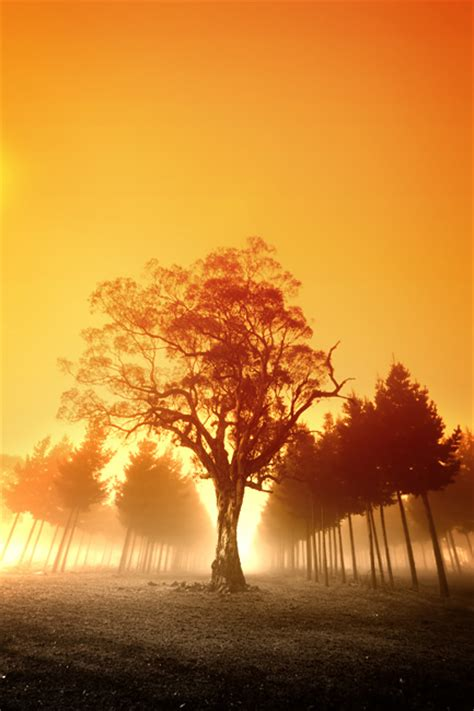 free photo 002 stock photo freeimages free stock photo forest the