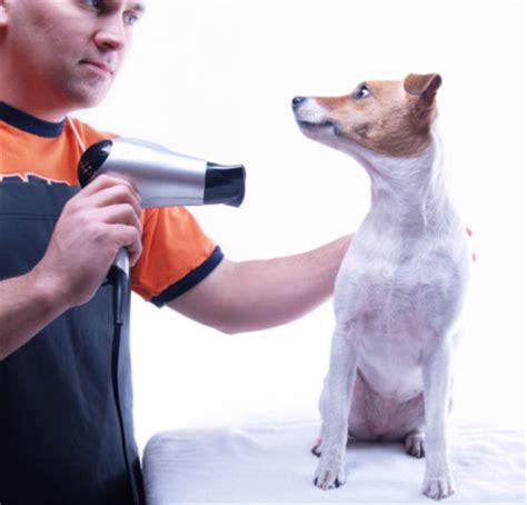 Hair Dryer Jaman Dulu bolehkah menggunakan hair dryer manusia pada anjing