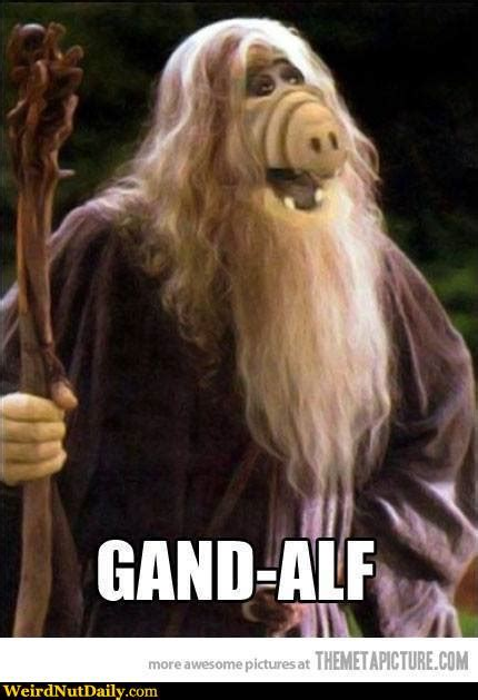 Alf Meme - funny pictures weirdnutdaily gand alf