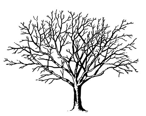 coloring page of a tree branch bare tree coloring page silhouette of branches in park
