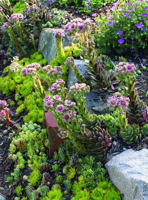 plants for a rock garden top 10 best plants for a rock garden top inspired