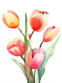 Magnolia Flower Paintings - tulips flowers watercolor painting stock photo colourbox