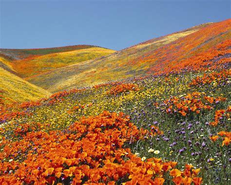 immagini paesaggi fioriti sfondo quot prati fioriti quot 1280 x 1024 paesaggi mare