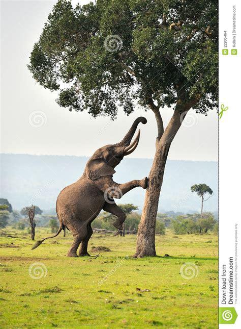 Elephant Stock Images - Image: 22805464