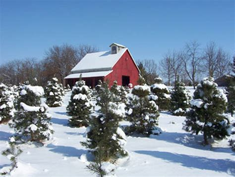 christmas tour 2016 christmas tree farms nodaway news