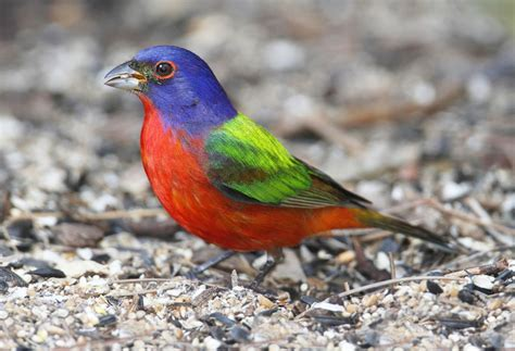 our top 5 spring migratory birds at tara vicksburg birding