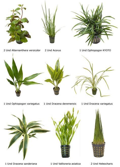 imagenes de flores y sus nombres plantas acuaticas con sus nombres comunes buscar con