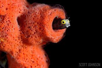 Sleepsuit Blue Stripe Octopus Turn Me Around dive cuba s silky seas aboard the jardines aggressor i scuba diving