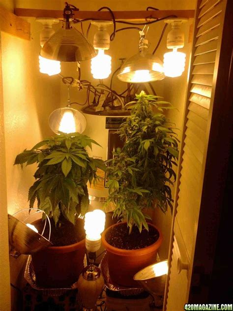 Closet Grow Room Setup by Closet Grow Photos Roselawnlutheran