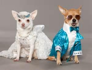 wedding dress dog photos doglers