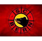 Scb Bern Nat Eishockey Sports Hd Wallpaper 491360