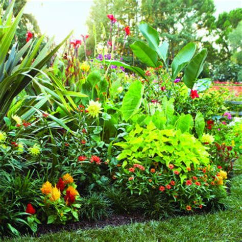 Plants For Backyard by Tropical Jewels Border Border Flowers For Sunset